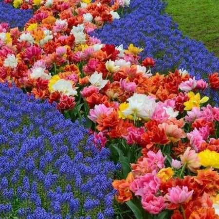 Kwiatów czar