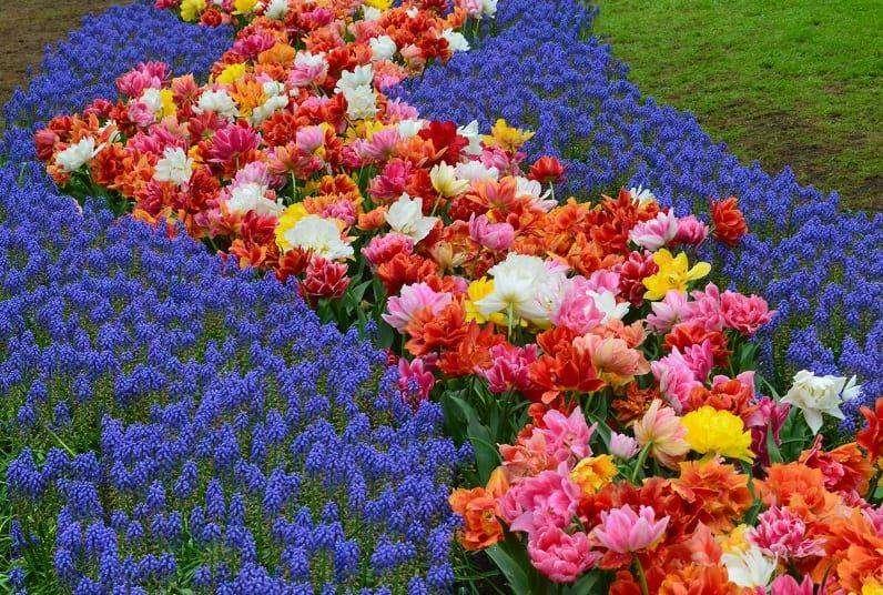 kwiaty o