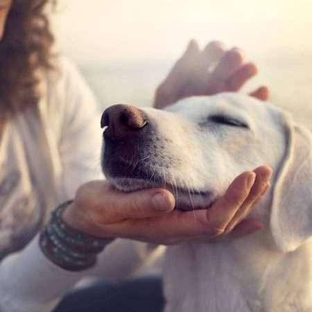 Psy reagują na emocje