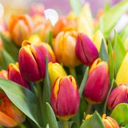 Zanim posadzisz kwiaty cebulowe
