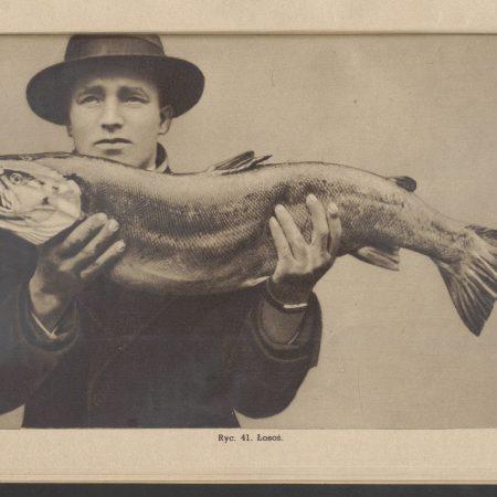 Bałtyckie ryby