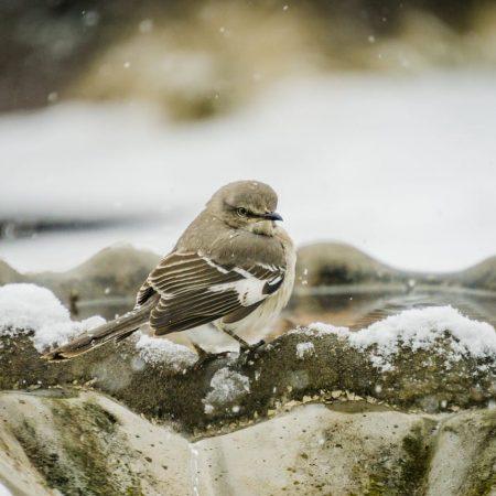 Jak dokarmiać ptaki?