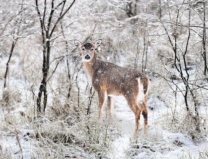 Jak pomagać zwierzętom zimą