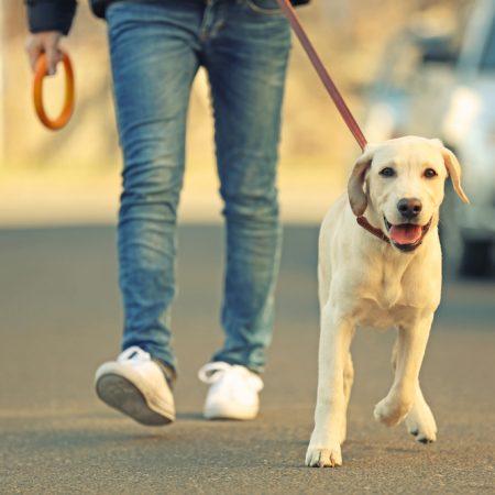 Psy pomogą nam w walce z koronawirusem?
