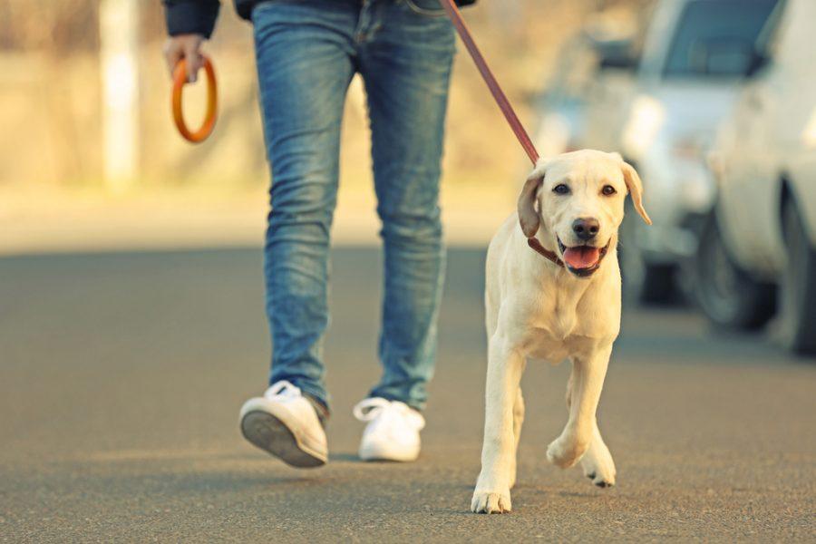 psy w walce z wirusem