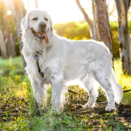 Jak obliczyć wiek psa? – najlepsze sposoby